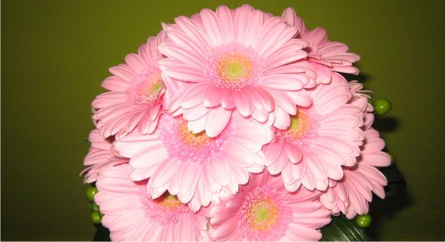 Envio de flores allium floristas for Plantas baratas