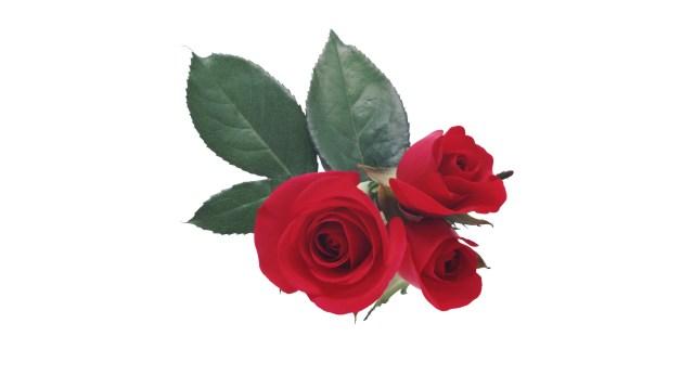 flores para distintas ocasiones  flores unicas  flores espectaculares 892bd08bf314e