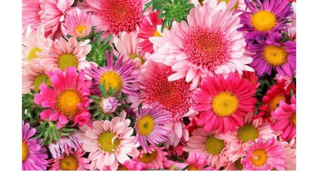 Nombres De Flores Allium Floristas