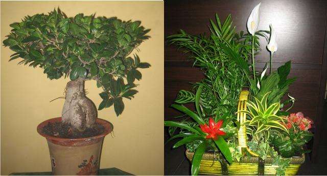 Plantas naturales allium floristas - Centros de plantas naturales ...