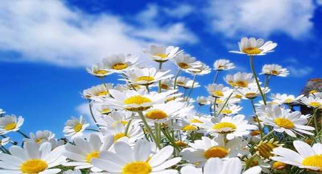 Almohada mortuoria allium floristas - Almohada mimos ...